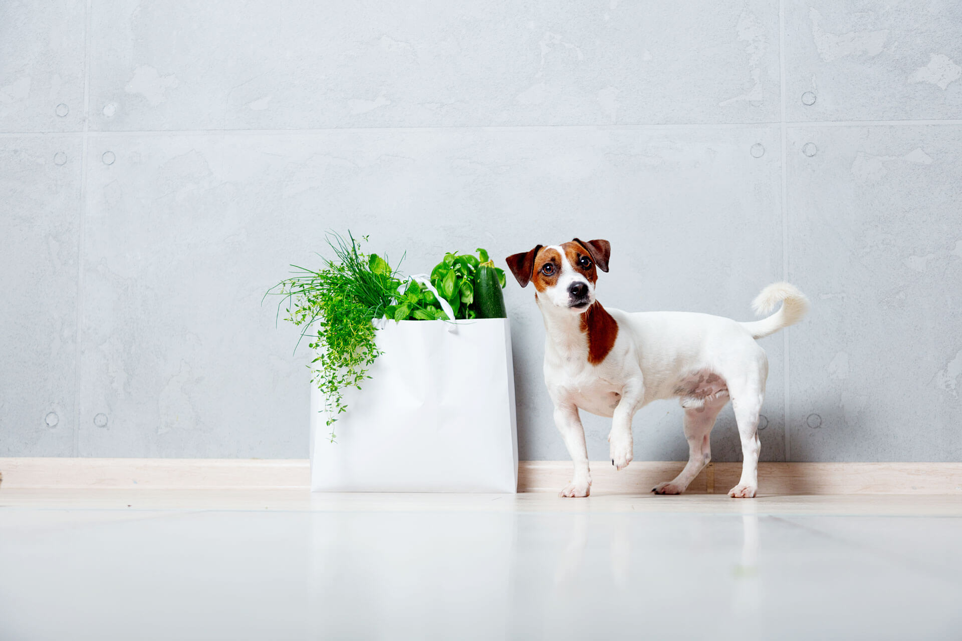 Vegan dog food: The debate between advantages & disadvantages for your dog's health