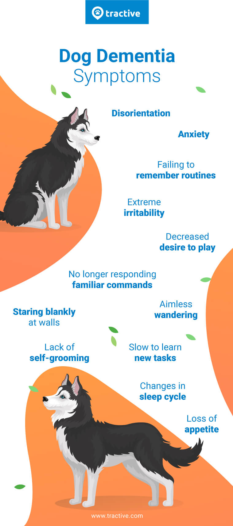 Dog dementia symptoms