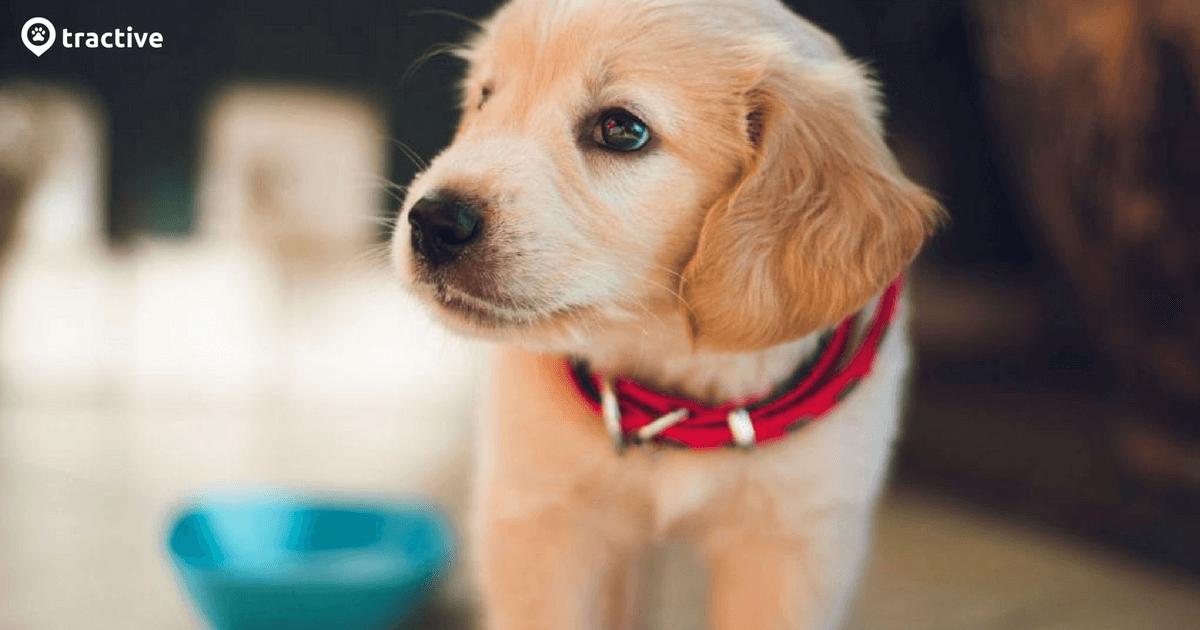 Dein Hund Trinkt Nicht 7 Haufige Ursachen Gegenmassnahmen Tractive