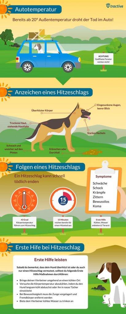 Sonnenstich beim Hund - wenn der Hitzeschlag beim Hund zuschlägt - Übersicht, wann es deinem Hund zu heiß wird