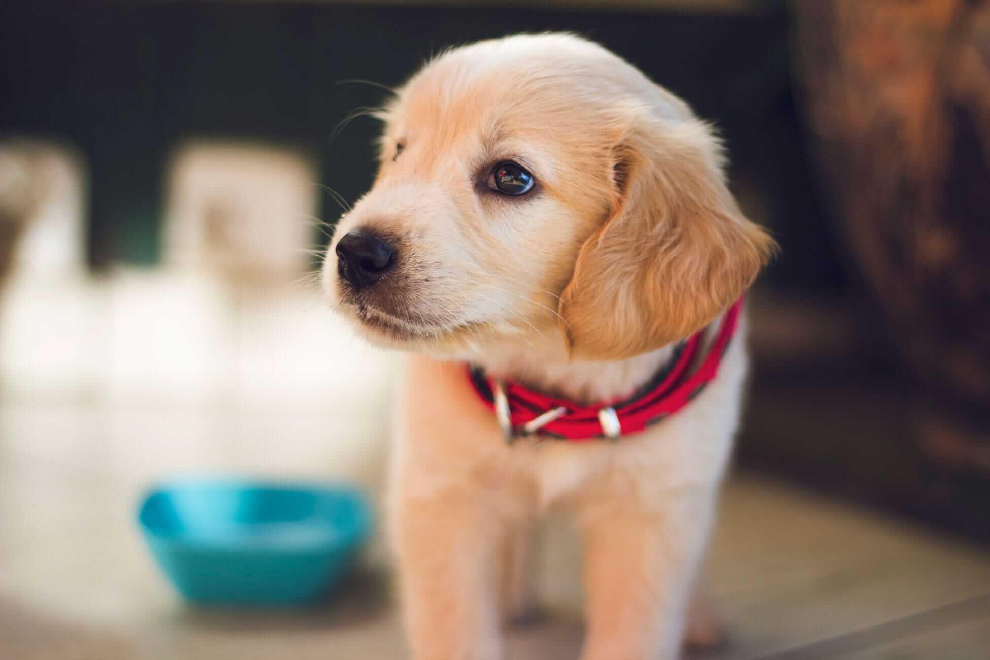 Hilfe, mein Hund trinkt nicht! Die 7 häufigsten Ursachen und besten Tipps
