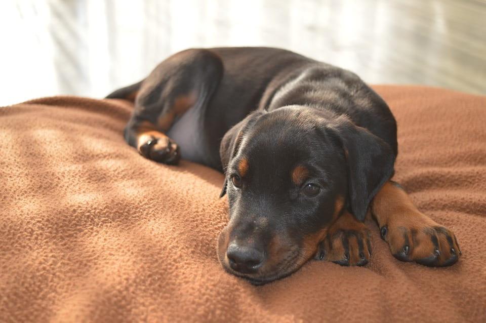 Durchfall bei Hunden: Was soll ich tun?