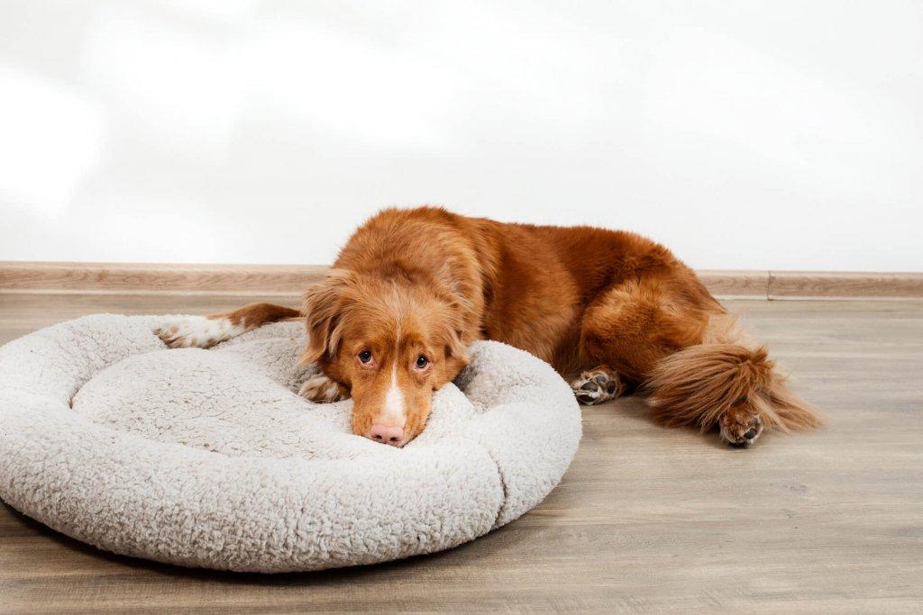 Wenn der Hund Durchfall hat: Ursache und Behandlung