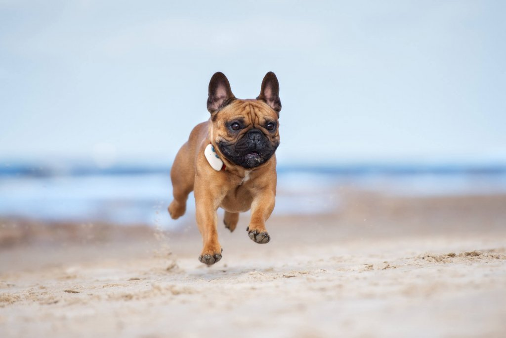 Dog Facts: 25 Fun, Weird and Interesting Facts about Dogs!