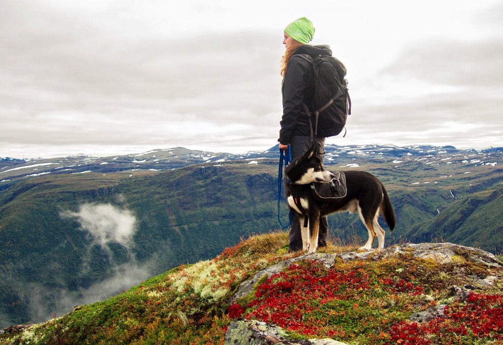 Hiking with dogs: What you need to consider