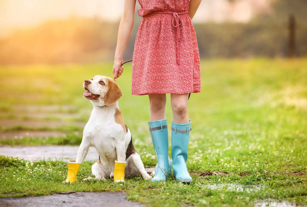 Dog Walk on a rainy day