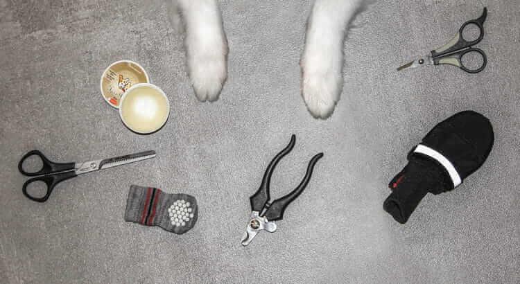 La zampa del cane: guida ad una cura efficace