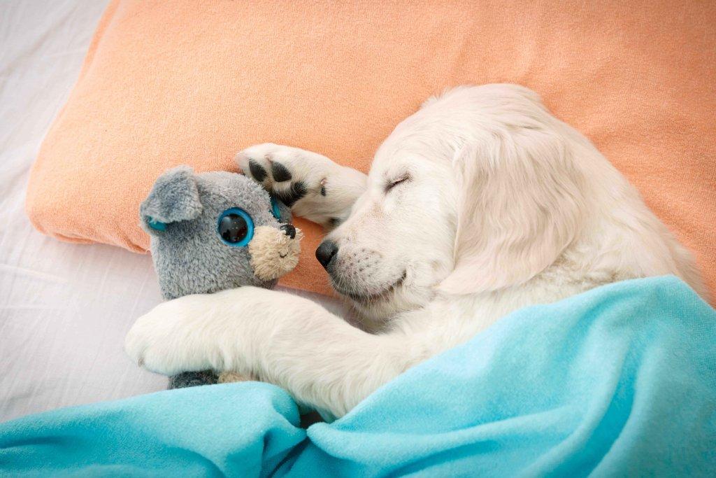 Immunsystem beim Hund stärken – aber wie?