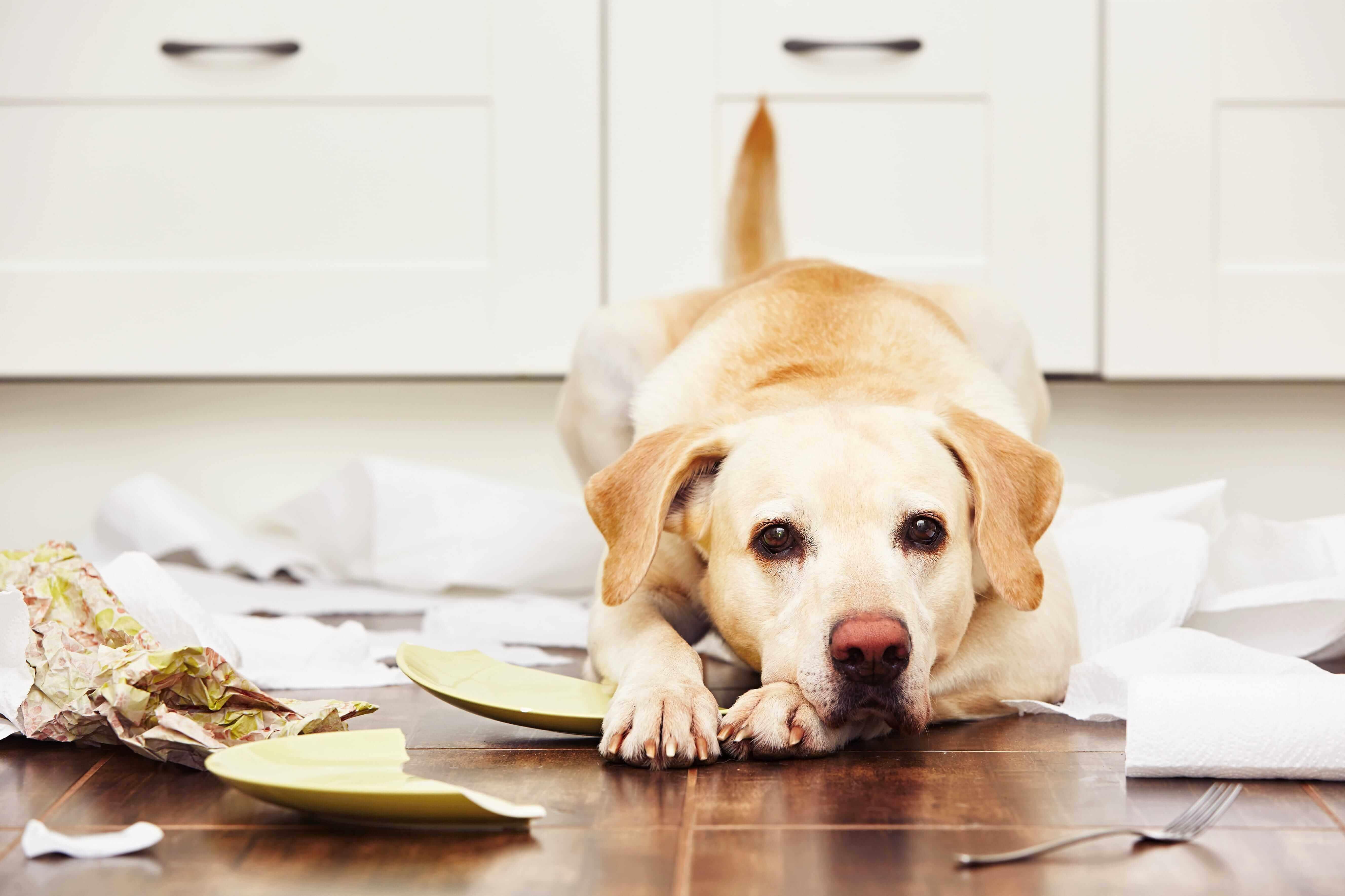 Sicherheit für Hunde