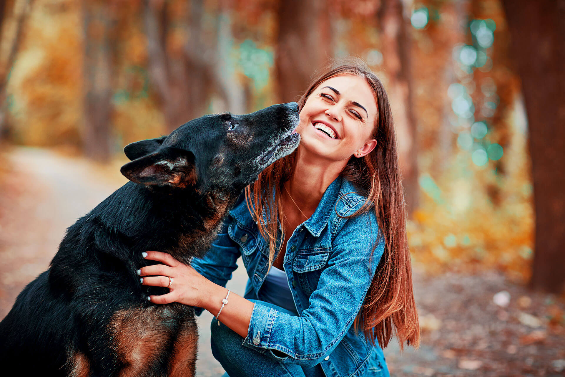 dog safety tips for healthy life