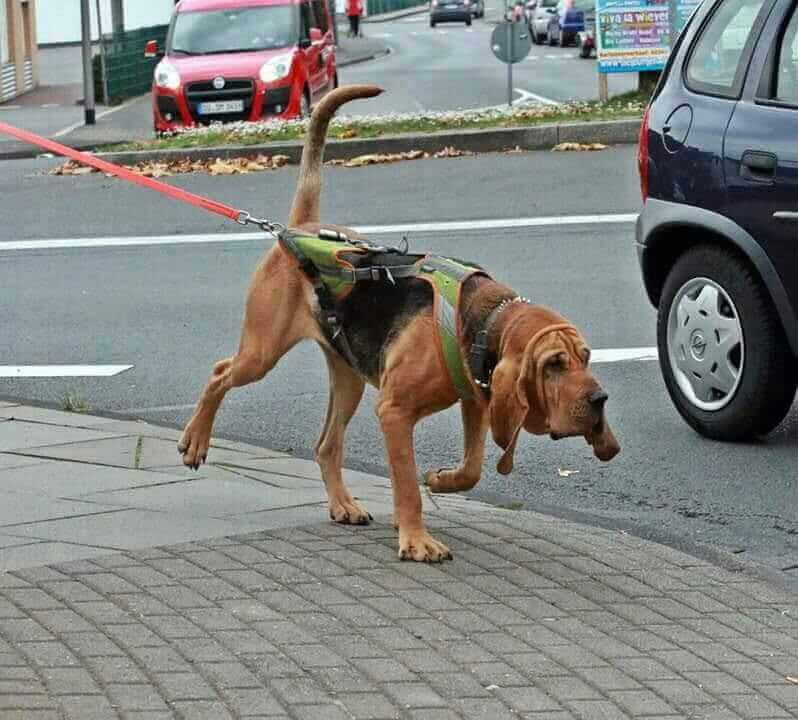 Tiersuchhund