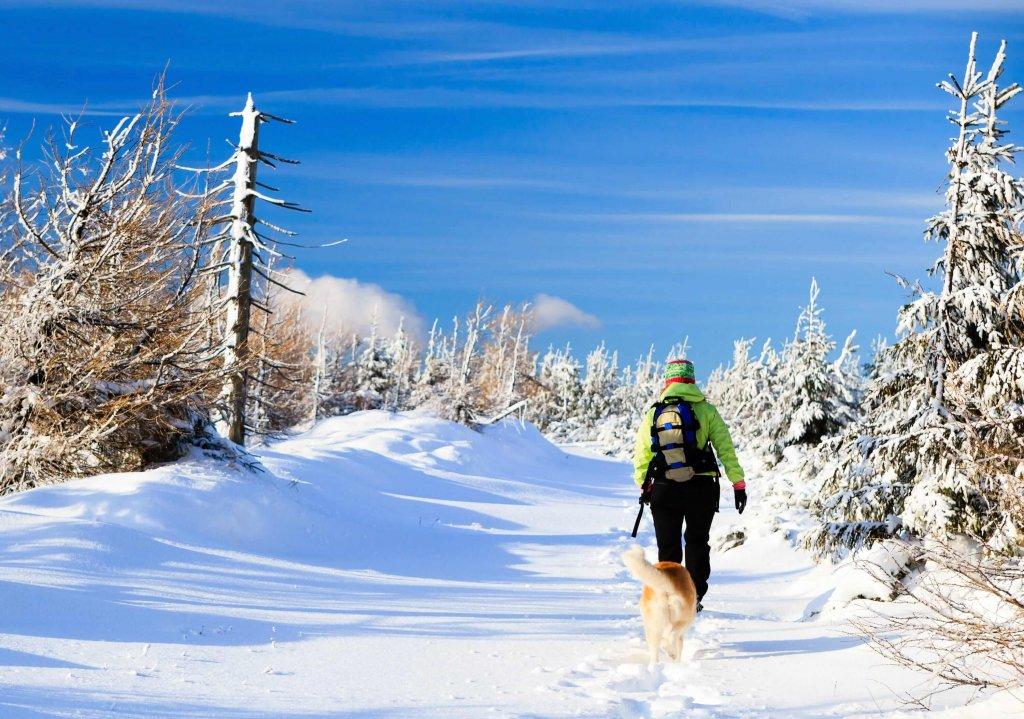 Tipps für den Urlaub mit Hund im Winter