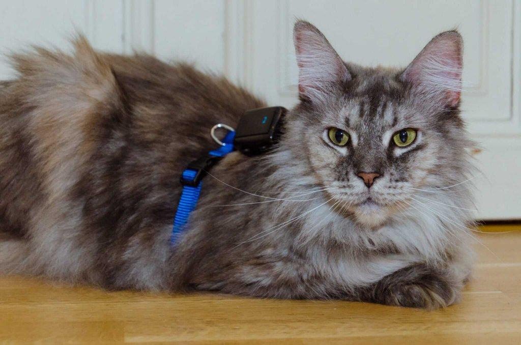 Tractive GPS für Katzen: So funktioniert's!
