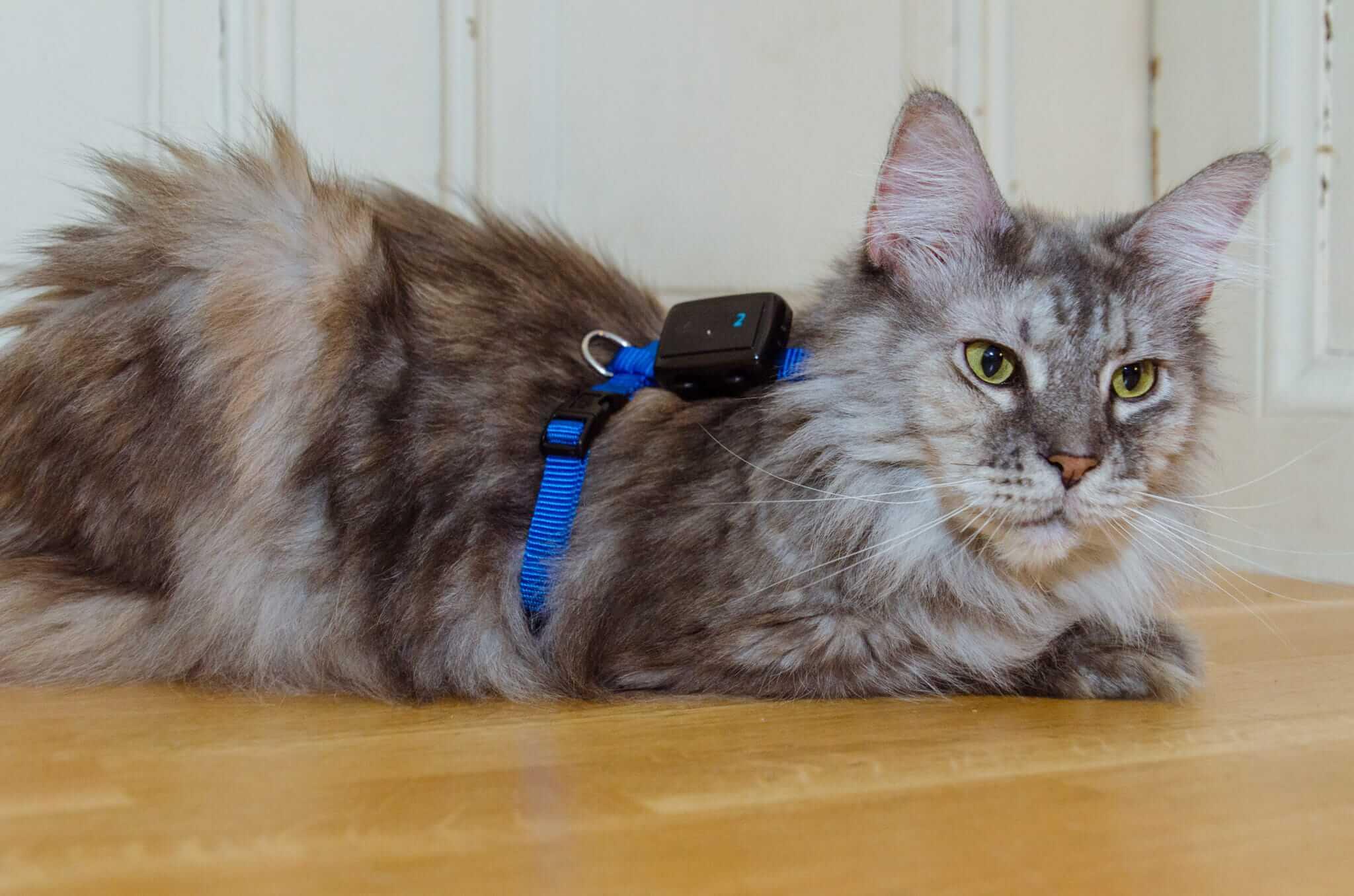 GPS für Katzen: Roxy Tractive GPS 2