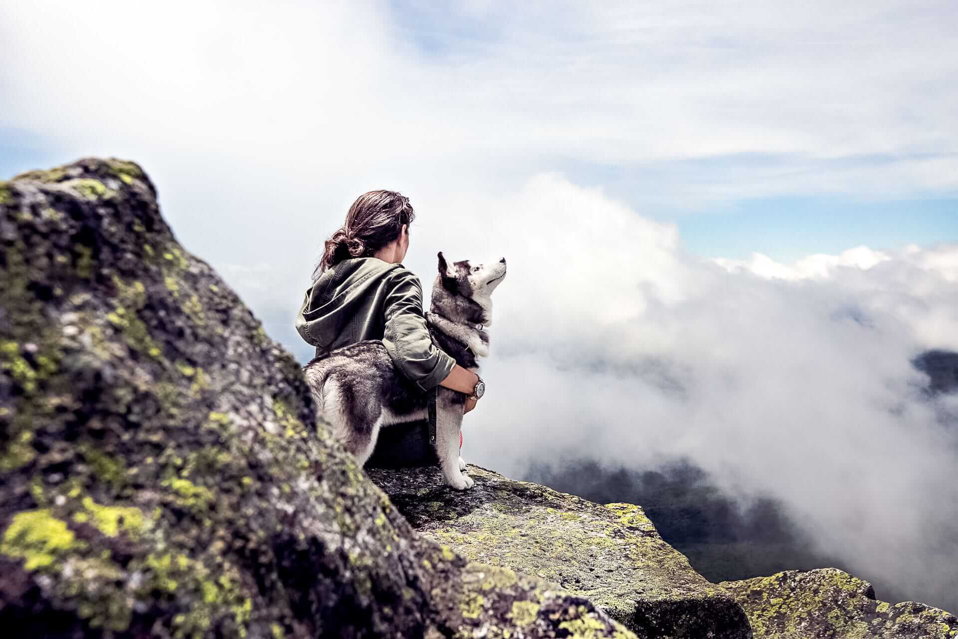 5 tips adventures with dogs