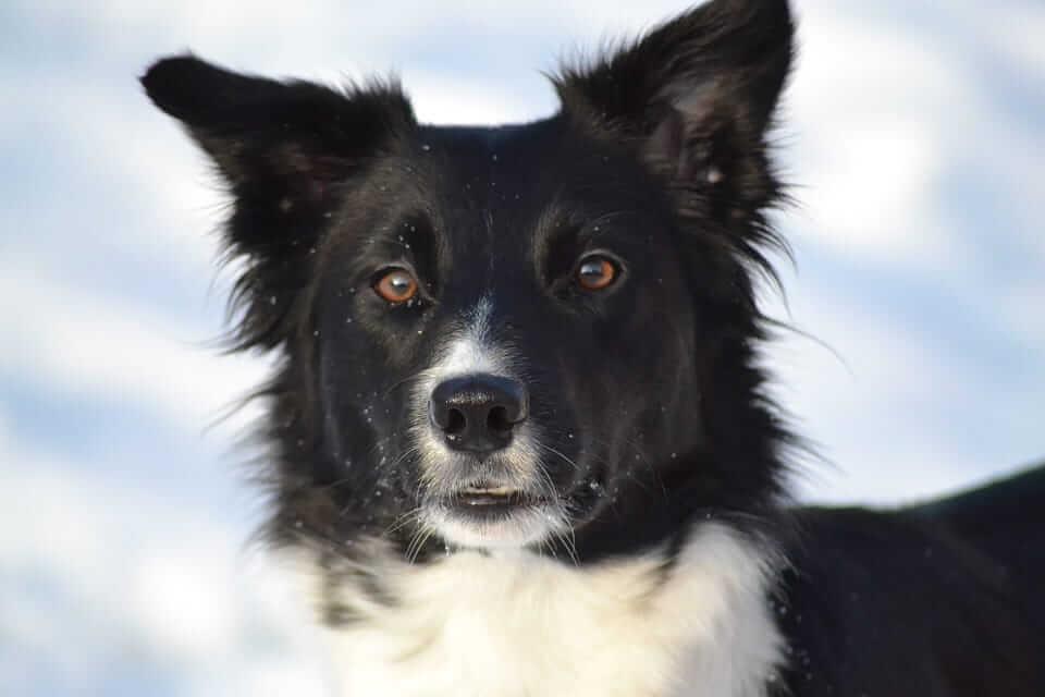 Den Hund gesund durch den Winter bringen