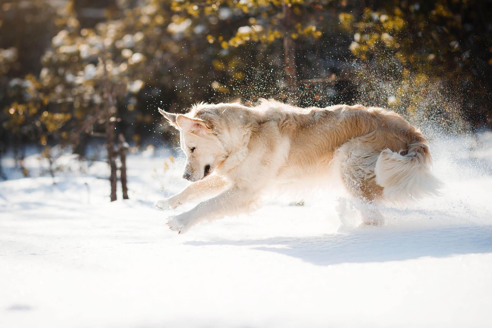 Hund im Schnee an einem sonnigen Wintertag