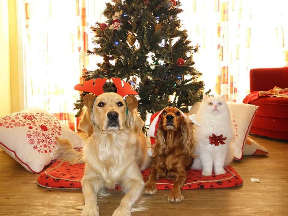 Celebrating Christmas With Dogs