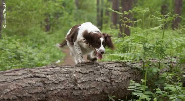 Tipps zur richtigen Hundeversicherung