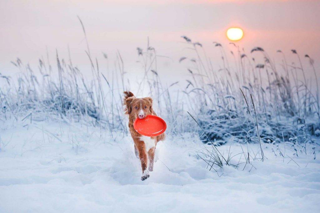 Winterspaß mit Hund abseits der Piste