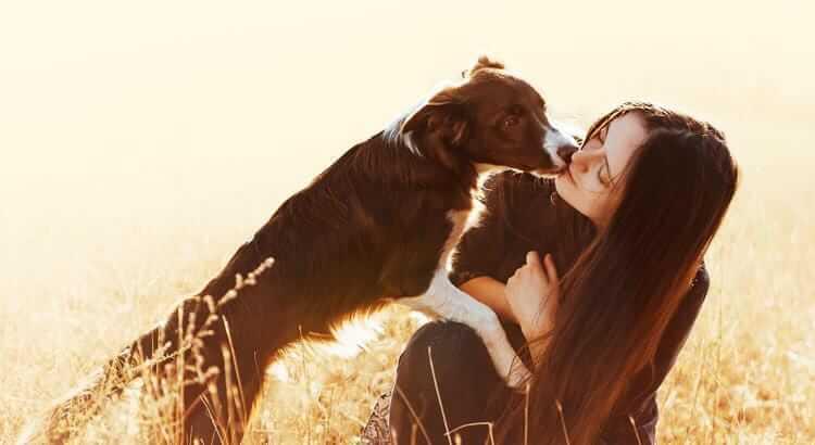 5 Gesten mit denen dir dein Vierbeiner seine Hundeliebe zeigt