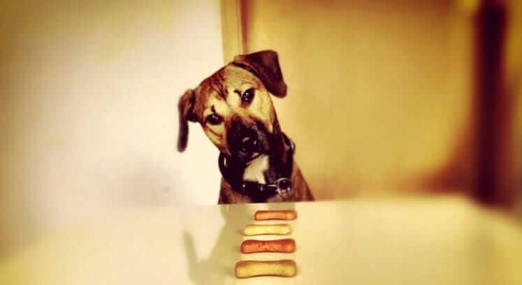 Biscotti facili e veloci per cani