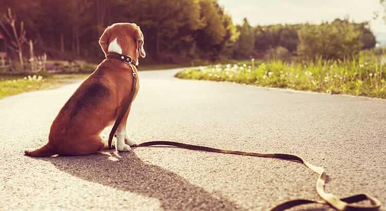Hund entlaufen - was tun?