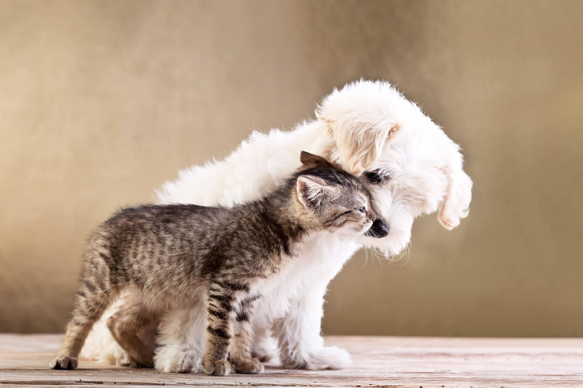 8 regali per i cani…dal cuore
