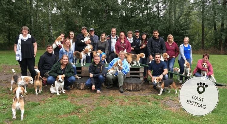 Beagle-Treffen: Ein Spielplatz nur für Beagles