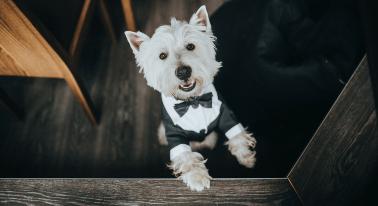 Checkliste für deine Hochzeit mit Hund