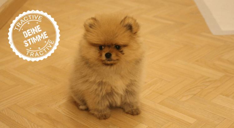 Hundepapa: Die erste Zeit mit dem neuen Hund
