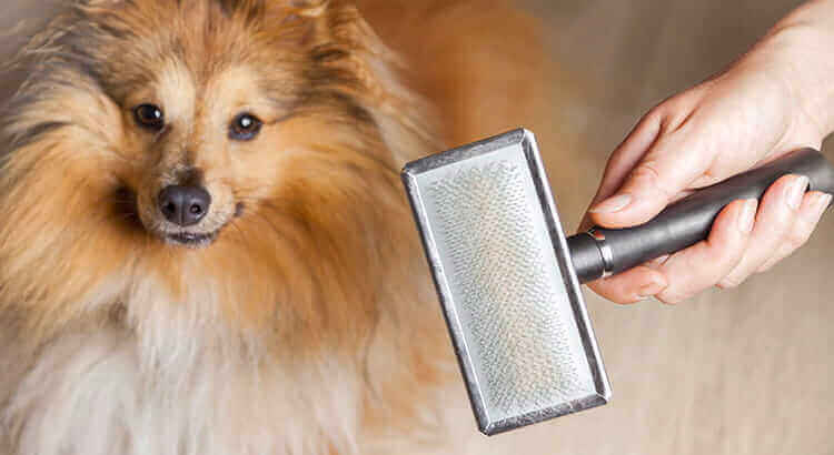 Dog shedding in winter: Top 5 tips