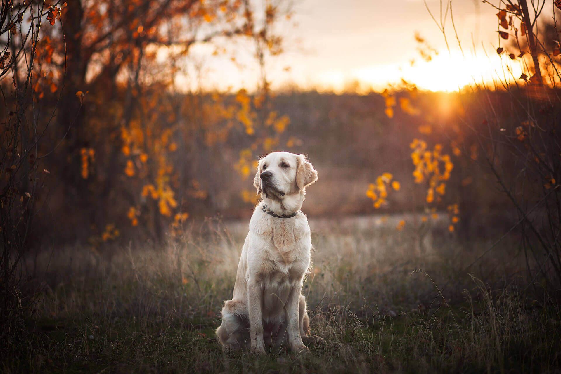 Hund Sam ging verloren - Dank dem Tractive GPS wurde er wieder gefunden