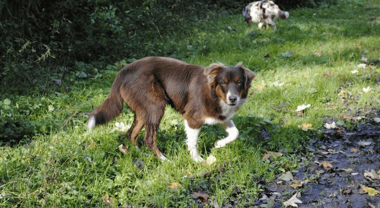 Unfall Hund