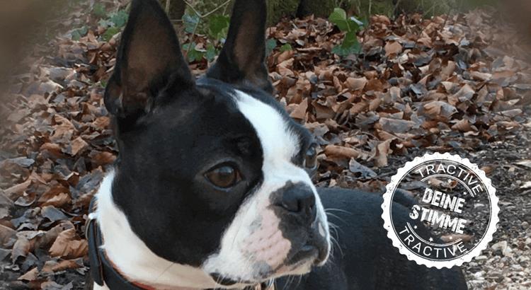 Hund Flugzeug: Ein wahres Abenteuer