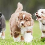Come socializza il cucciolo?