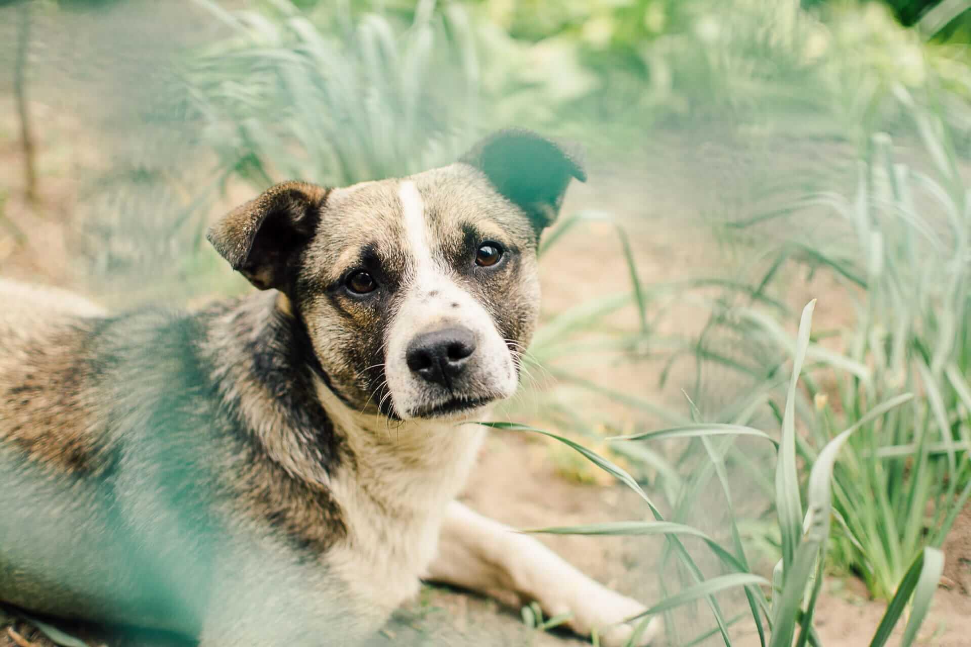 Ho trovato un cane smarrito: cosa devo fare?