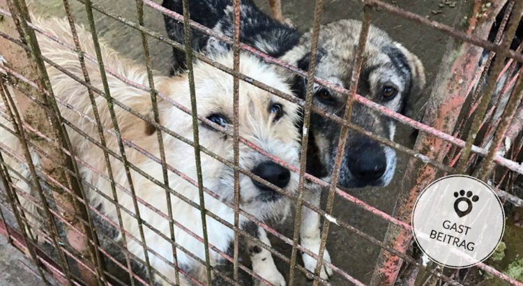 Hunde aus Rumänien – ein Herzensprojekt
