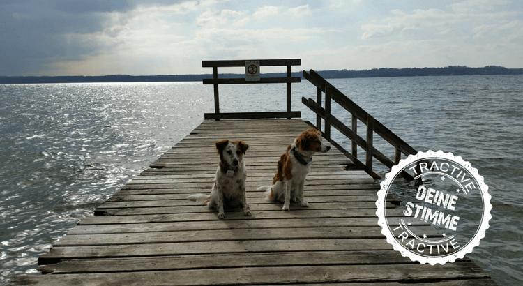 Ein Hundegedicht der besonderen Art