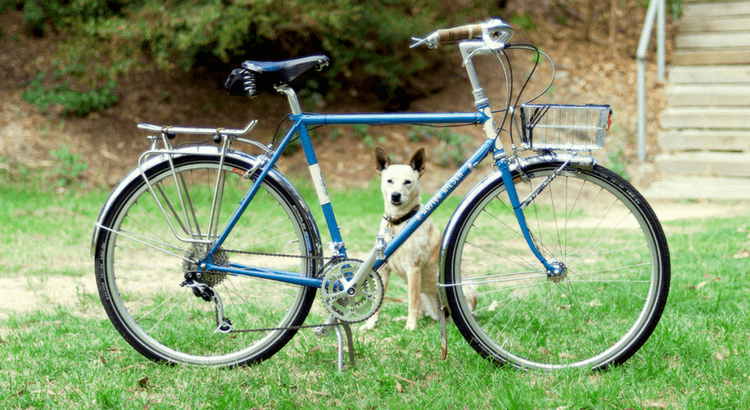4 essentielle Tipps für das Radfahren mit Hund