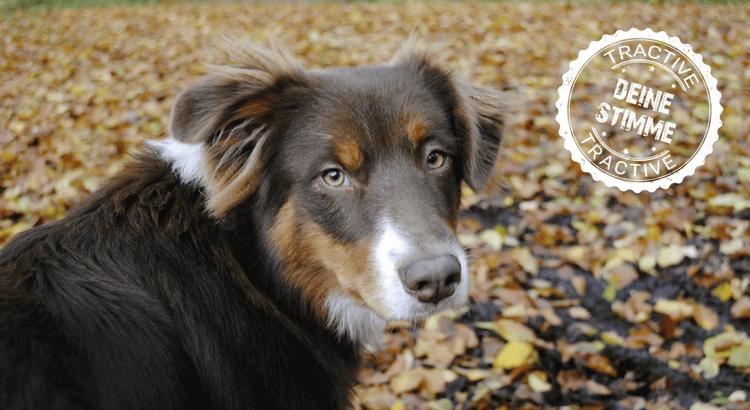 Suchaktion: Bei Unfall lief Hund weg
