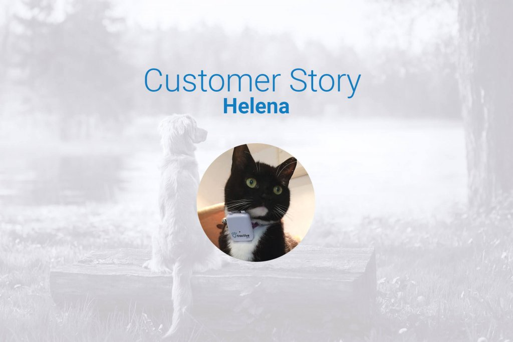cat walking around: a customer review with Tractive GPS