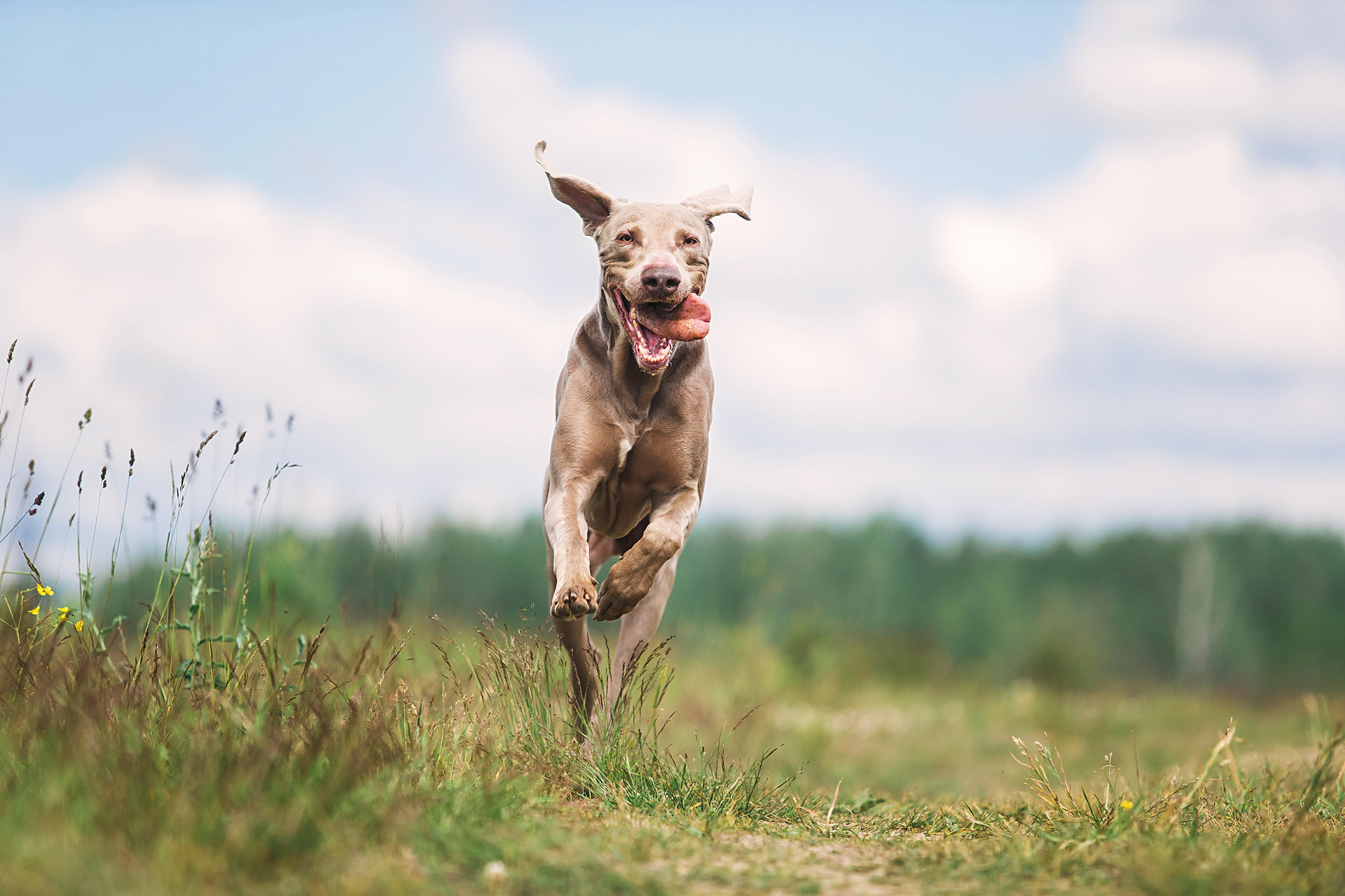 Fare sport con il cane