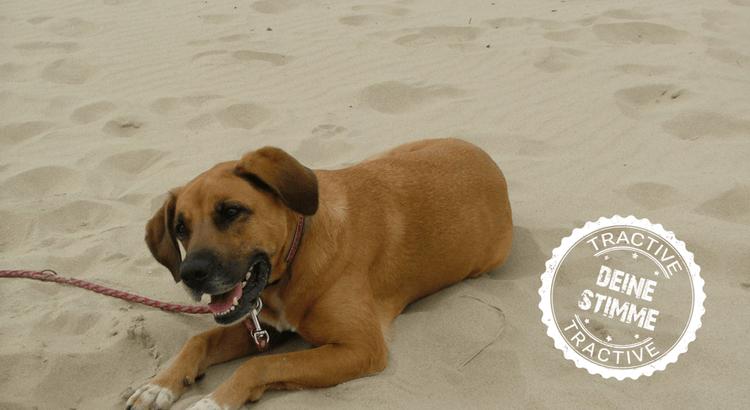 Ein neuer Hund nach Tod: Gibt es eine zweite Chance?
