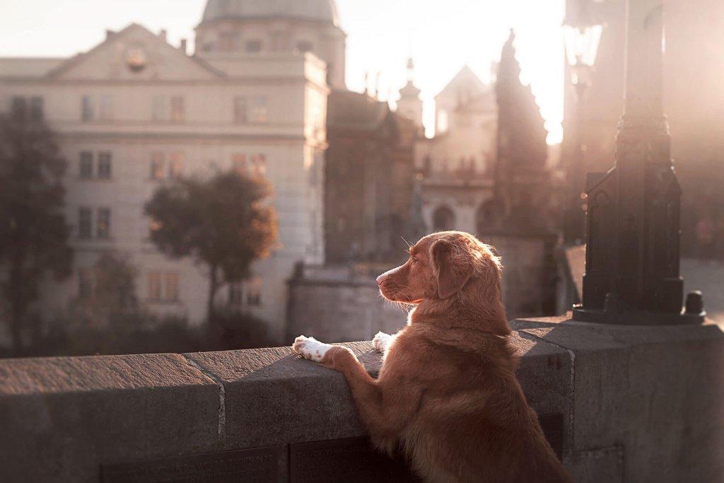 Stadthund - diese Dinge gibt es zu beachten, wenn dein Hund in der Stadt wohnt