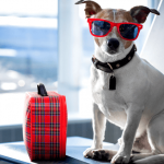 Viaggiare in aereo con il cane: ecco come