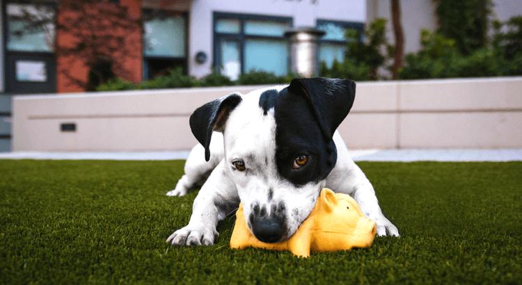 I 5 errori da evitare quando educhi il cane