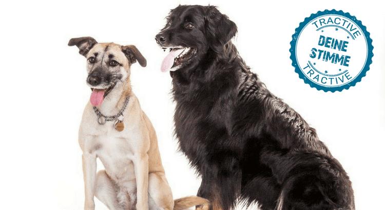 Das Dilemma: Eine Reise mit Hund nach Portugal