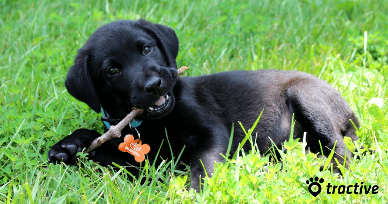 I 5 errori da evitare nell'educazione del cane (2)