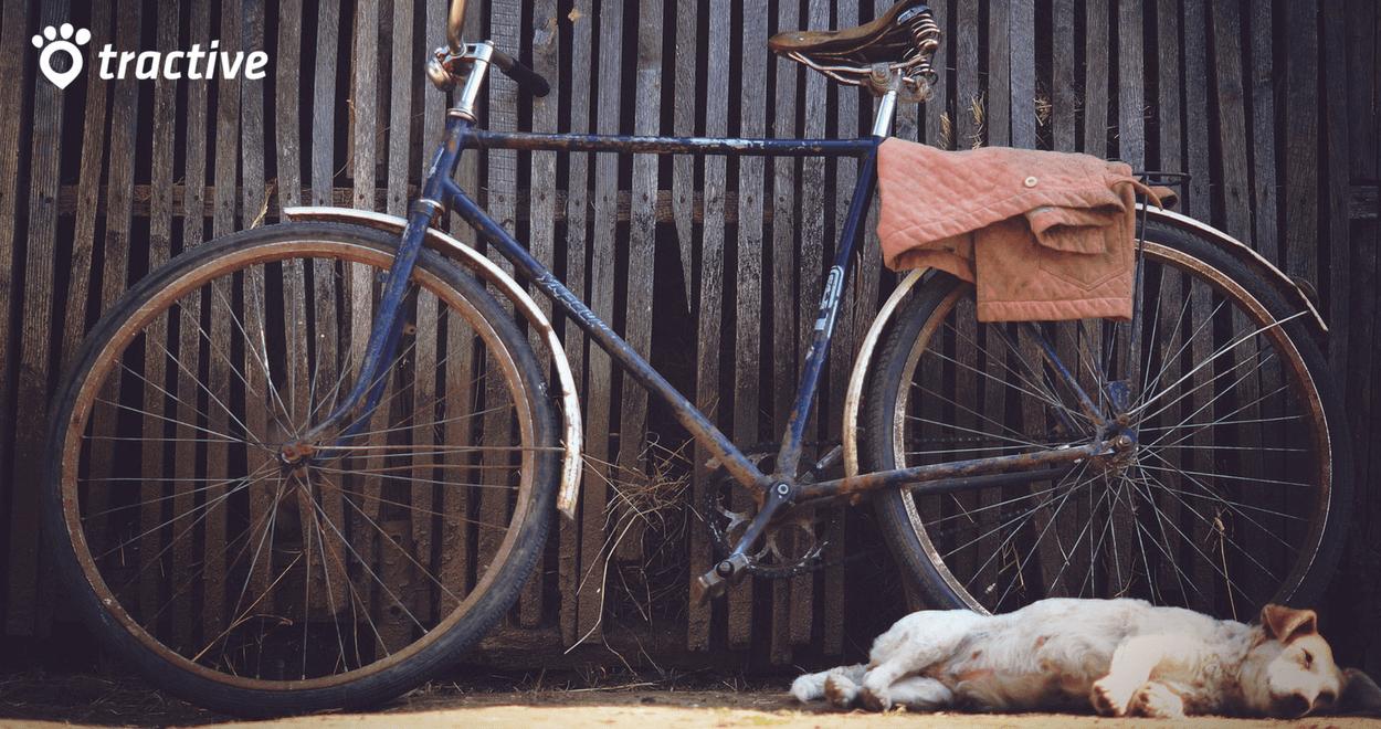 In bici con il cane